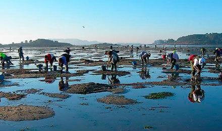 Tours with shellfish farmers of Cambados (Galicia)